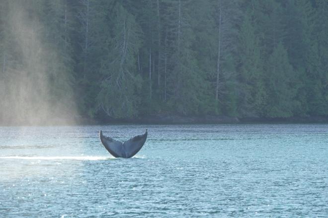 whale-051