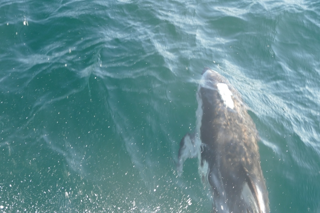 whale-075