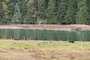 13-4-more-grizzlies-in-estuary