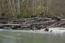 8-triplet-cubs-climbing-logs-with-mother
